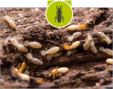 termites avant travaux démolition
